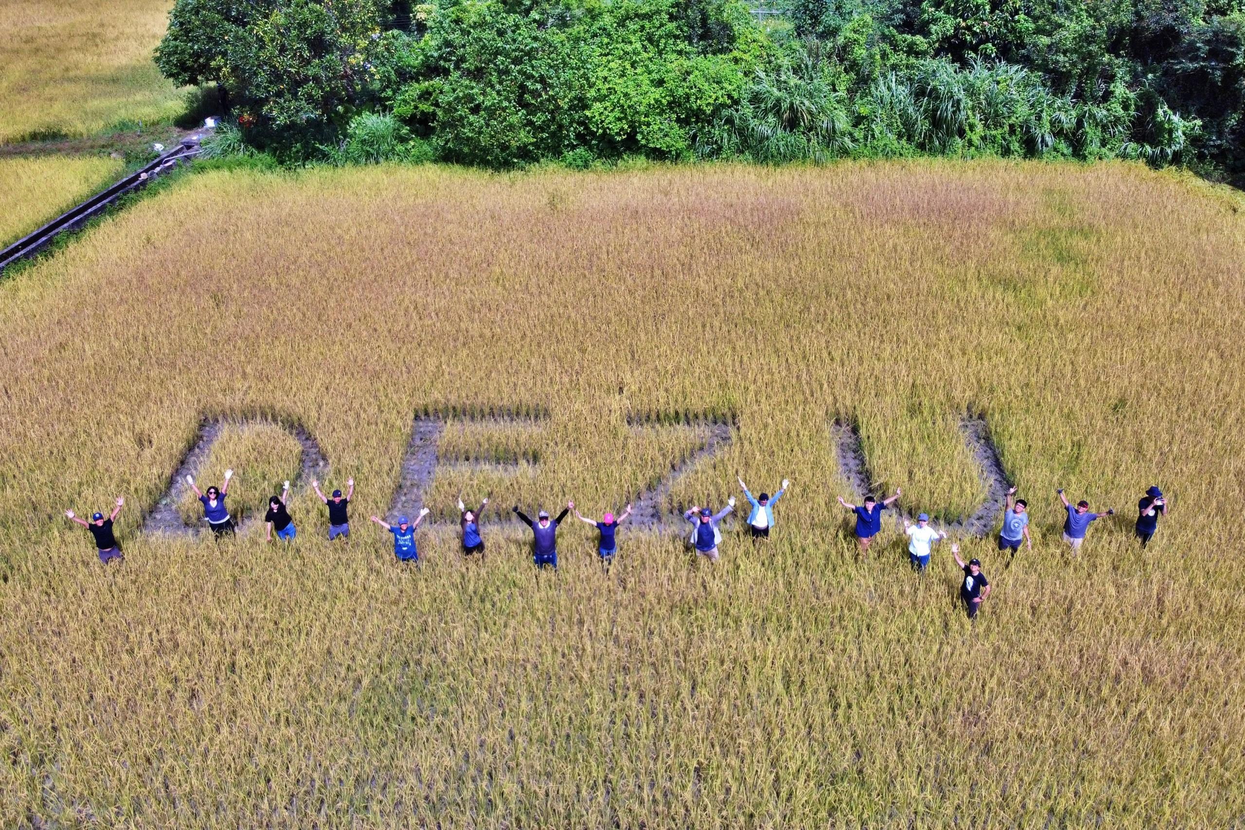DEZU Harvest 跟著 德築 割稻趣